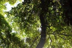 Mooie zonnestraal in tropisch regenwoud in Kew Mae Pan, Chaing-MAI, Thailand stock afbeeldingen