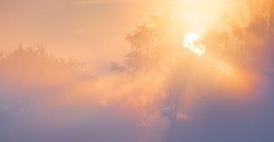 Mooie zonnestralen die door bomen in mist glanzen. Royalty-vrije Stock Afbeelding