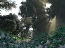 Mooie zonnestralen in groen bos Stock Afbeeldingen