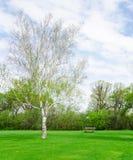 Mooie zonnige dag in park in de lentetijd stock afbeelding