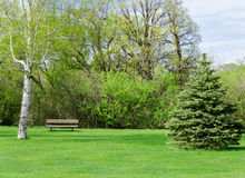 Mooie zonnige dag in park in de lentetijd stock foto's