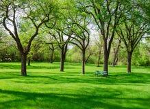Mooie zonnige dag in park in de lentetijd royalty-vrije stock fotografie