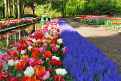 Mooie zonnige ochtend bij de Tuinen Keukenhof Royalty-vrije Stock Foto's