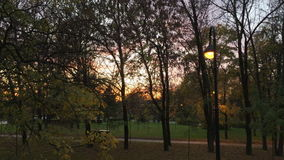 Mooie zonsondergang achter takken en bomen in het Park stock videobeelden