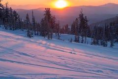 Mooie zonsondergang in de bergen De winterlandschap met sparren in de sneeuw Royalty-vrije Stock Fotografie