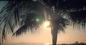 Mooie Zonsondergang in de Keerkringen op de Achtergrond van de Oceaan en Kokosnotenbladeren Weergeven van de Zonsondergang door d stock videobeelden