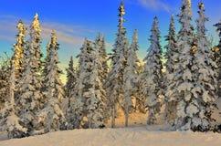 Mooie zonsondergang in een bos van de de winterspar Royalty-vrije Stock Afbeeldingen