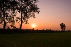 Mooie zonsondergang en hemelachtergrond over de padievelden in de avond vakantie in het platteland van Thailand Stock Foto's