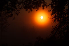 Mooie zonsondergang in het bos de betoverende schoonheid van aard Stock Foto's