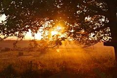 Mooie zonsondergang met boom Royalty-vrije Stock Foto's
