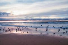 Mooie zonsondergang met troep van zeemeeuwen stock foto