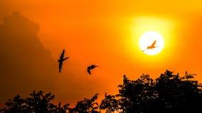 Mooie Zonsondergang met vogels die op de gouden oranje hemel vliegen stock afbeeldingen