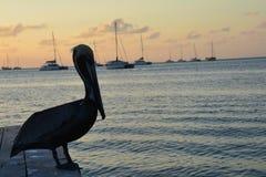 Mooie zonsondergang op Caye-Breeuwijzereiland in Belize royalty-vrije stock foto