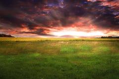 Mooie Zonsondergang op een groen gazon Stock Foto