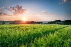 Mooie Zonsondergang over Gebieden van Gerst Stock Afbeelding