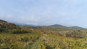 Mooie zonsondergang over wijngaardgebieden, bergenachtergrond schot Het oogsten van wijngaard in het de herfstseizoen, satellietb stock videobeelden