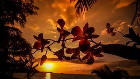 Mooie zonsondergang in Palm Beach stock afbeelding