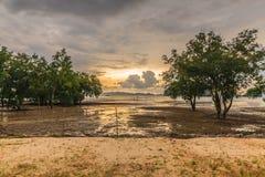 Mooie zonsondergang van de zeekust en de mangrove stock afbeeldingen