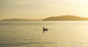 Mooie zonsondergang van strand dichtbij Sydney, Australië Royalty-vrije Stock Fotografie