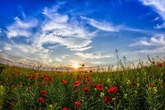 Mooie zonsonderganghemel met witte wolken over een groen de zomergebied met papavers royalty-vrije stock afbeeldingen