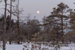 Mooie zonsopgang in de winter royalty-vrije stock afbeeldingen