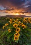 Mooie zonsopgang en wildflowers bij het gezichtspunt van de rowenakam, Erts royalty-vrije stock afbeelding