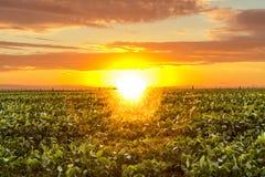 Mooie zonsopgang in het platteland Royalty-vrije Stock Afbeeldingen