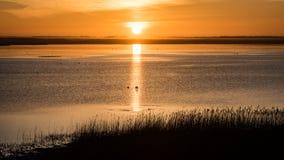 Mooie zonsopgang over het meer van het land Royalty-vrije Stock Fotografie