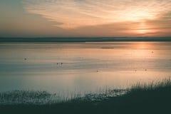 mooie zonsopgang over het meer van het land - uitstekende groen ziet eruit stock foto