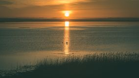 mooie zonsopgang over het meer van het land - uitstekende groen ziet eruit royalty-vrije stock foto