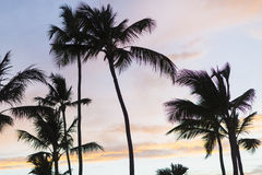 Mooie Zonsopgang over Tropisch Strand royalty-vrije stock afbeeldingen