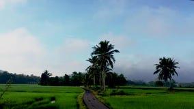 Mooie zoom tijdpad van het rijstveld in de buurt van het dorp in Kedah Maleisië stock videobeelden