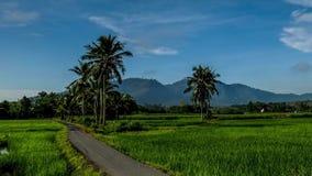 Mooie zoom tijdpad van het rijstveld in de buurt van het dorp in Kedah Maleisië stock footage