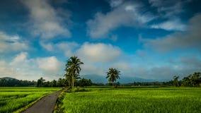 Mooie zoom tijdspad van het rijstveld in Kedah Maleisië stock videobeelden