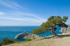 Mooie zuidenmening met overzees, berg en pijnboom Stock Afbeelding
