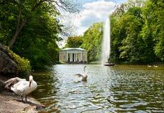 Mooie zwanen op het meer in Sofiyivsky-Park in Uman, de Oekraïne stock afbeeldingen