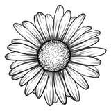 Mooie zwart-wit, zwart-witte madeliefjebloem Stock Afbeeldingen
