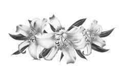 Mooie zwart-witte leliesamenstelling Boeket van bloemen Bloemendruk Tellerstekening stock afbeelding