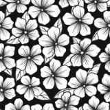 Mooie zwart-witte naadloze achtergrond met grafische overzichtsbloemen Royalty-vrije Stock Afbeelding