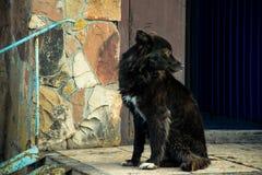 Mooie zwarte hond door de steenmuur stock fotografie
