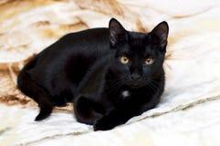 Mooie zwarte kat op een deken royalty-vrije stock fotografie