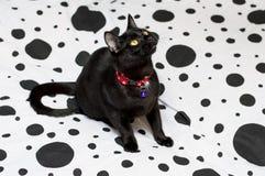 Mooie zwarte kat op een wit en zwart bed royalty-vrije stock afbeeldingen