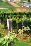 Mooie Zwitserse grapeyard in Alpen stock foto