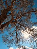 Mooiere bomen in Irpin, de Oekraïne in glorierijke September-zonneschijn - Kyiv - de Oekraïne - Irpin royalty-vrije stock afbeelding