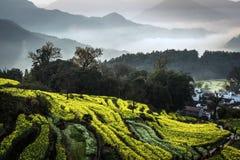 Mooiste land Wuyuan Stock Fotografie