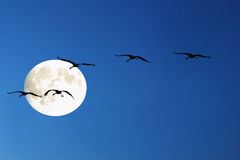 In the moon Stock Photography