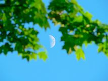 Free Moon Stock Images - 11742184