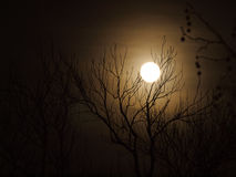 The Moon. Landcape with the Moon during night time Royalty Free Stock Image