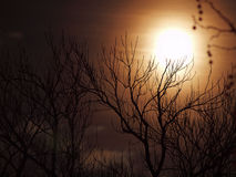 The Moon. Landcape with the Moon during night time Royalty Free Stock Photography
