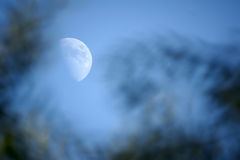 Moon. Evening, the moon rises in sky Stock Photography